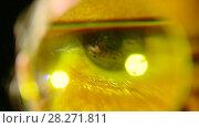 Купить «Глаз учёного», видеоролик № 28271811, снято 22 апреля 2017 г. (c) юрий алейников / Фотобанк Лори