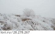 Купить «Movement on a grassy mountain slope», видеоролик № 28278267, снято 27 марта 2018 г. (c) Андрей Радченко / Фотобанк Лори