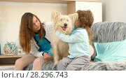 Купить «A girl with a boy is stroking a dog», видеоролик № 28296743, снято 14 августа 2017 г. (c) Tatiana Kravchenko / Фотобанк Лори