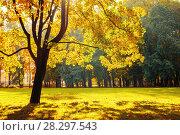 Купить «Осенний пейзаж. Осенний парк в солнечную погоду», фото № 28297543, снято 3 октября 2016 г. (c) Зезелина Марина / Фотобанк Лори