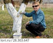 Купить «Женщина среднего возраста белит ствол фруктового дерева. Весенние работы в саду», фото № 28303647, снято 14 апреля 2018 г. (c) Ирина Борсученко / Фотобанк Лори