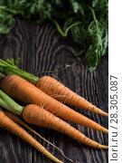 Купить «Freshly grown carrots», фото № 28305087, снято 17 июля 2016 г. (c) Jan Jack Russo Media / Фотобанк Лори