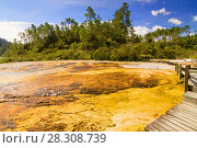 Купить «Colourful silica terrace formed by hot water algae growing in the geothermal area of Orakei Korako (The Hidden Valley), Northern Island, New Zealand», фото № 28308739, снято 26 мая 2019 г. (c) BE&W Photo / Фотобанк Лори