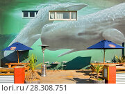 Купить «Whale murals in Kaikoura, New Zealand», фото № 28308751, снято 16 января 2019 г. (c) BE&W Photo / Фотобанк Лори