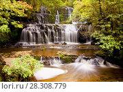 Купить «Purakaunui cascades waterfall, Catlins, South Island, New Zealand», фото № 28308779, снято 19 августа 2019 г. (c) BE&W Photo / Фотобанк Лори