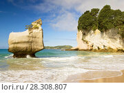 Купить «White limestone rock formations and fine sandy beach at Cathedral Cove on the Coromandel Peninsula in New Zealand, North Island», фото № 28308807, снято 19 апреля 2019 г. (c) BE&W Photo / Фотобанк Лори