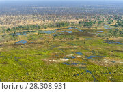 Aerial view of rivers, streams and grasslands in Okavango Delta, Botswana, Africa. Стоковое фото, агентство BE&W Photo / Фотобанк Лори
