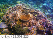Купить «Coral formations, The Great Barrier Reef, Queensland, Australia», фото № 28309223, снято 23 апреля 2019 г. (c) BE&W Photo / Фотобанк Лори