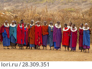 Купить «Massai group with traditional clothing in Masai Mara, Kenya», фото № 28309351, снято 25 марта 2019 г. (c) BE&W Photo / Фотобанк Лори