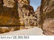 Rosy red walls of the Siq canyon, leading to the Treasury in Petra, Jordan. Стоковое фото, агентство BE&W Photo / Фотобанк Лори