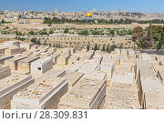 Купить «The visitors of Jewish cemetery put the stones on the graves according to the ancient traditions, Jerusalem, Israel», фото № 28309831, снято 15 августа 2018 г. (c) BE&W Photo / Фотобанк Лори