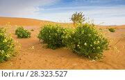 Купить «Oasis in Sahara desert rotation timelapse», видеоролик № 28323527, снято 1 марта 2018 г. (c) Кирилл Трифонов / Фотобанк Лори