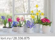 Купить «spring flowers on windowsill», фото № 28336875, снято 23 апреля 2018 г. (c) Майя Крученкова / Фотобанк Лори