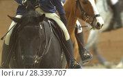 Купить «Female rider on the horse rideing at show jumping competition», видеоролик № 28339707, снято 6 августа 2020 г. (c) Константин Шишкин / Фотобанк Лори