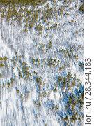 Купить «Сосновое редколесье зимой, вид сверху», фото № 28344183, снято 21 марта 2017 г. (c) Владимир Мельников / Фотобанк Лори
