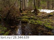 Купить «Forest stream among mossy shores in early spring during the melting of snow», фото № 28344639, снято 24 апреля 2018 г. (c) Евгений Харитонов / Фотобанк Лори