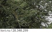 Купить «Olive tree and pouring rain», видеоролик № 28348299, снято 21 августа 2018 г. (c) Данил Руденко / Фотобанк Лори