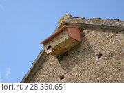 "Купить «Swift nestbox on a house wall alongside hollow ""swift brick"" entrances to nest boxes in a roof space, Worlington, Suffolk, UK, July.», фото № 28360651, снято 14 августа 2018 г. (c) Nature Picture Library / Фотобанк Лори"