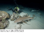 Купить «Female scuba diver looks at shark in the night. Tawny nurse shark, Giant sleepy shark or Madame X (Nebrius ferrugineus)», фото № 28370523, снято 2 апреля 2018 г. (c) Некрасов Андрей / Фотобанк Лори