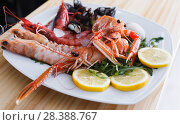 Купить «Seafood dish with langoustines, shrimps and clams», фото № 28388767, снято 26 января 2018 г. (c) Яков Филимонов / Фотобанк Лори