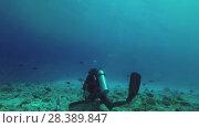 Купить «Scuba diver collects the remains of fish after feeding tiger sharks, Indian Ocean, Fuvahmulah island, Maldives», видеоролик № 28389847, снято 26 марта 2018 г. (c) Некрасов Андрей / Фотобанк Лори