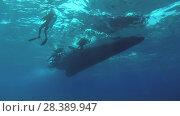 Купить «Group scuba divers swim to the ladder diving boat, Indian Ocean, Fuvahmulah island, Maldives», видеоролик № 28389947, снято 27 марта 2018 г. (c) Некрасов Андрей / Фотобанк Лори