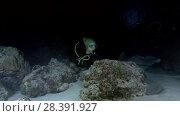 Купить «Young beautiful woman scuba diver look at stingrays at night. Pink whipray (Himantura fai), Indian Ocean, Maldives», видеоролик № 28391927, снято 25 марта 2018 г. (c) Некрасов Андрей / Фотобанк Лори
