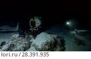 Купить «Young beautiful woman scuba diver look at stingrays at night. Pink whipray (Himantura fai), Indian Ocean, Maldives», видеоролик № 28391935, снято 25 марта 2018 г. (c) Некрасов Андрей / Фотобанк Лори