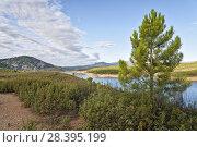 Купить «Cistus Ladanifer and pines in Atazar reservoir. Sierra Norte. Madrid. Spain.», фото № 28395199, снято 16 сентября 2017 г. (c) age Fotostock / Фотобанк Лори