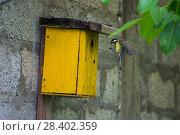 Купить «Синица большая у синичника. Great Tit (Parus major).», фото № 28402359, снято 9 мая 2018 г. (c) Игорь Архипов / Фотобанк Лори