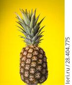 Купить «Large ripe pineapple with leaves on yellow background», фото № 28404775, снято 22 декабря 2017 г. (c) Сергей Молодиков / Фотобанк Лори
