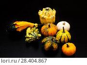 Купить «Colorful pumpkin and squash», фото № 28404867, снято 17 октября 2017 г. (c) Сурикова Ирина / Фотобанк Лори
