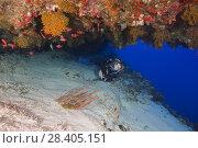 Купить «Female scuba diver peeks into a cave with beautiful corals», фото № 28405151, снято 13 марта 2018 г. (c) Некрасов Андрей / Фотобанк Лори