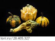 Купить «Colorful pumpkin and squash», фото № 28405327, снято 19 октября 2017 г. (c) Сурикова Ирина / Фотобанк Лори