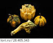 Купить «Colorful pumpkin and squash», фото № 28405343, снято 19 октября 2017 г. (c) Сурикова Ирина / Фотобанк Лори
