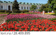 Купить «Moscow, Russia - May 12. 2018. Flowerbeds with tulips in Alexander Garden», видеоролик № 28409895, снято 13 мая 2018 г. (c) Володина Ольга / Фотобанк Лори