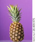 Купить «Pineapple with peel and green stem on purple», фото № 28409975, снято 22 декабря 2017 г. (c) Сергей Молодиков / Фотобанк Лори