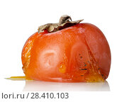 Купить «Spoiled rotten persimmon fruit isolated on white», фото № 28410103, снято 20 декабря 2017 г. (c) Сергей Молодиков / Фотобанк Лори