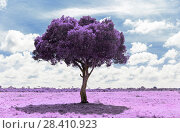 Купить «purple acacia tree in savanna with infrared effect», фото № 28410923, снято 21 февраля 2017 г. (c) Syda Productions / Фотобанк Лори