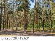 Купить «Томилинский лесопарк весной. Лыткарино, Волкуша», фото № 28419631, снято 14 мая 2018 г. (c) Владимир Сергеев / Фотобанк Лори