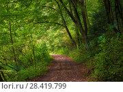 Купить «beautiful shady park on a summer day, view of the path», фото № 28419799, снято 14 августа 2017 г. (c) Константин Лабунский / Фотобанк Лори