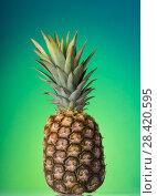 Купить «Large ripe pineapple with stalk, on green», фото № 28420595, снято 22 декабря 2017 г. (c) Сергей Молодиков / Фотобанк Лори