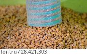 Купить «Обработка зерен пшеницы», видеоролик № 28421303, снято 16 мая 2018 г. (c) FMRU / Фотобанк Лори
