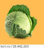 Купить «Savoy cabbage», фото № 28442263, снято 27 октября 2012 г. (c) Александр Лычагин / Фотобанк Лори