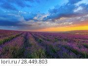 Купить «Лавандовые поля на фоне красивого вечернего неба», фото № 28449803, снято 20 июня 2017 г. (c) Яна Королёва / Фотобанк Лори