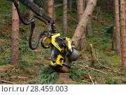Купить «Timber harvesting machine felling and processing conifers, Inverness-shire, Scotland, August 2007», фото № 28459003, снято 22 сентября 2018 г. (c) Nature Picture Library / Фотобанк Лори