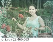 Купить «portrait of young female holding a basket near roses in outdoors», фото № 28460063, снято 18 апреля 2017 г. (c) Яков Филимонов / Фотобанк Лори