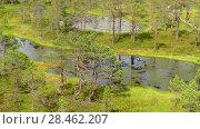 Купить «Swamp Viru Raba in Estonia», видеоролик № 28462207, снято 22 октября 2016 г. (c) BestPhotoStudio / Фотобанк Лори