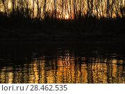 Купить «Золотой закат над рекой. Вечерний пейзаж на заросшем берегу Волги», фото № 28462535, снято 13 апреля 2009 г. (c) Алёшина Оксана / Фотобанк Лори