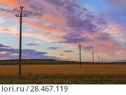Купить «Power line in a field at sunset», фото № 28467119, снято 21 июля 2015 г. (c) Юрий Бизгаймер / Фотобанк Лори